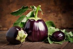 Sammansättning med tre aubergine, stilleben Arkivfoton