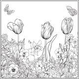 Sammansättning med vårblommor: tulpan påskliljor, violets, för Royaltyfri Bild