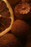 sammansättning torkad blommafrukt Arkivbild