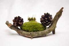 Sammansättningen av gåvorna av skogen royaltyfri foto