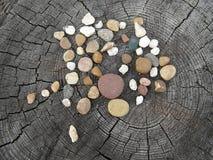 Sammansättningen av stenarna på stubben 1 livstid fortfarande pebbles Royaltyfri Fotografi