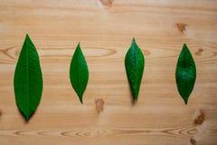 Sammansättningen med fyra olika gröna sidor på trätabellen - bild royaltyfria bilder