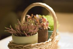 sammansättningsväxter Royaltyfri Bild