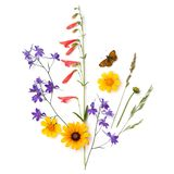 Sammans?ttning av v?xter och blommor p? en vit bakgrund ?ng arkivbild
