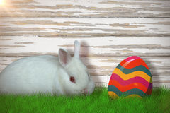 Sammansatt bild av ståenden av den gulliga vita kaninen Arkivbilder