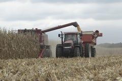 Sammanslutning- och traktorskördhavre Arkivfoto