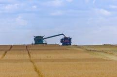Sammanslutningpäfyllningsskörd in i kornvagnen Arkivbilder