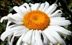 Sammanställning av blommamakro 12 arkivbilder