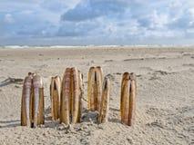 Sammansättning av rakknivmusslor på stranden Royaltyfria Bilder