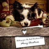 Sammansättning för hund- och Santa Christmas hälsningkort Arkivfoto