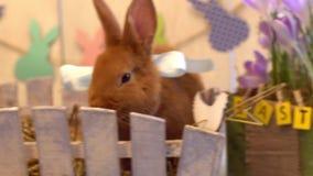Sammanträde för begrepp för symbol för fluffig kanineaster beröm traditionellt i en ask