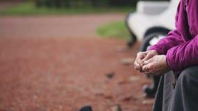 Sammanträde för gammal kvinna på en bänk och matningar som en flock av duvor panerar stock video