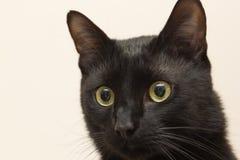 Sammanträde för svart katt i lägenheten Arkivbilder