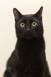 Sammanträde för svart katt i lägenheten Royaltyfria Bilder