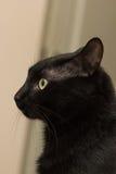 Sammanträde för svart katt i lägenheten Royaltyfri Bild