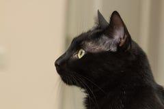 Sammanträde för svart katt i lägenheten Royaltyfri Fotografi