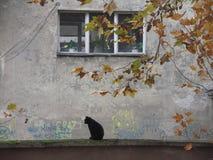 Sammanträde för svart katt på en vägg Arkivfoto