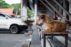 Sammanträde för tillfällig hund på bänk arkivbild