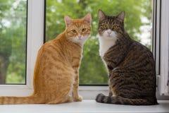 Sammanträde för två katt på fönsterfönsterbrädan Fotografering för Bildbyråer