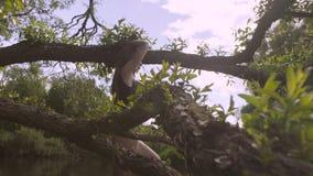 Sammanträde för ung kvinna på en trädfilial stock video