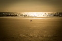 Sammanträdefågel i det varma ljuset på sanden royaltyfria foton