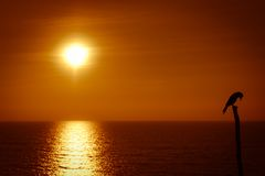 Sammanträdefågel och Goa solnedgång Fotografering för Bildbyråer
