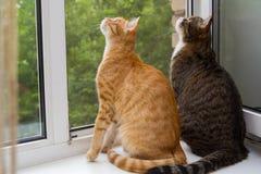 Sammanträde för två katt på fönsterfönsterbrädan Arkivbild