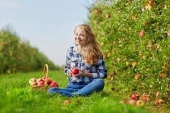 Sammelnäpfel der jungen Frau im Garten Stockfoto