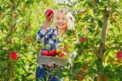 Sammelnäpfel der jungen Frau im Garten Stockbilder