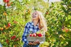 Sammelnäpfel der jungen Frau im Garten Lizenzfreies Stockfoto