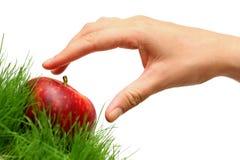 Sammeln-Äpfel Lizenzfreies Stockbild