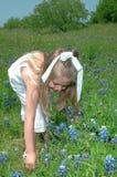Sammeln-Blumen Lizenzfreie Stockfotos