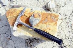 Sammeln des Ammonitfossils lizenzfreie stockbilder