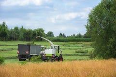 Sammeln des Grünfutters mit landwirtschaftlichen Fahrzeugen Stockfotografie