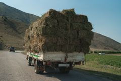 Sammeln des Heus für das Vieh Heuen Sie das Ernten für Winter Mähendes Gras des Herbstes stockfotos