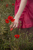 Sammeln-Mohnblumen Stockfoto
