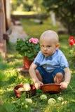 Sammelnapfel des kleinen Jungen im Fruchtgarten lizenzfreie stockbilder