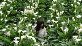 Sammelnblumen auf einem Callaliliengebiet Stockbilder