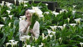 Sammelnblumen auf einem Callaliliengebiet Lizenzfreie Stockfotos