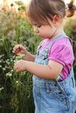 Sammelnblumen des kleinen Mädchens Lizenzfreies Stockbild