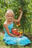 Sammelntomaten des jungen Mädchens im Sommer arbeiten im Garten Stockbild