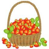 Sammelte einen großzügigen Korb der Ernte A voll von reifen saftigen Beeren Frische schöne rote Erdbeere, eine Quelle von Vitamin lizenzfreie abbildung