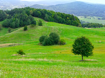 Sammer hilly meadow Stock Image