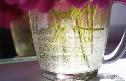 Sammer sunlight glass water old mirror reflection window red peony close-up day. Day no people indoors close-up red color peony old mirror reflection window Royalty Free Stock Photos