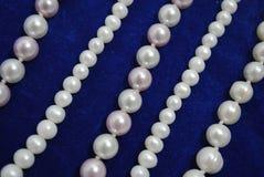 sammet för bluepärlavänd Royaltyfri Bild