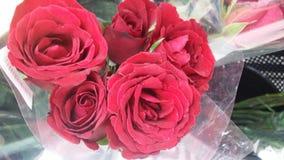 Sammetslena röda rosor Fotografering för Bildbyråer