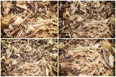 Sammlung Abstreifenholz Chip Mulch stockbild