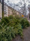 Sammlung alte Weihnachtsbäume nach Weihnachten lizenzfreies stockfoto