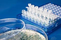 Sammlung bakterielle Kolonien von der Nährbodenplatte lizenzfreies stockbild