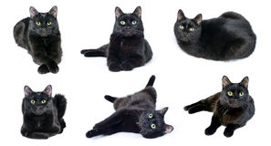 Sammlung Bilder der schwarzen Katze Stockfotos